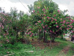 From barren land to rich forest