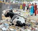 'Smart' answer to waste woes