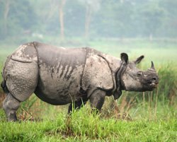 Rhino battles for life after poacher attack