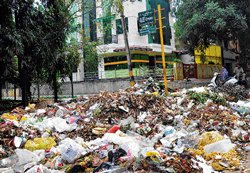 Garbage mounds reappear in City
