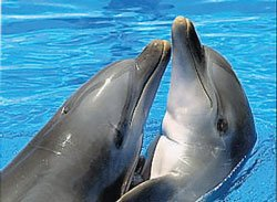 'Super-spy' dolphins can stay alert for 15 days even in sleep