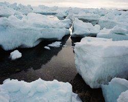 Arctic deep-sea litter doubles in last decade