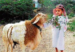 Alipur village gears up for Bakrid today
