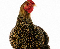 The avian flu scare and after