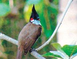 Bird census at BRT tiger reserve on Dec 1, 2