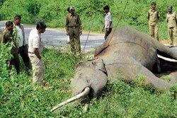 Two elephants electrocuted