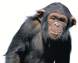 Gene that gives humans edge over apes decoded