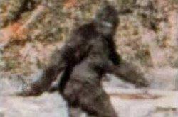 Bigfoot is part human: study