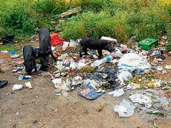 Garbage is a problem in Kadur