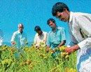 Return of native crops