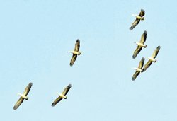 Bird census: Decrease in bird migration