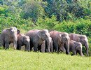 Elephants to be electronically tagged to avoid train hits