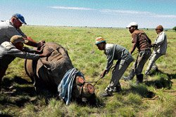 Ruthless smuggling rings hunt down rhinos