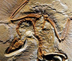 India's first dinosaur fossil rediscovered