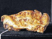 Amateur explorer finds massive gold nugget