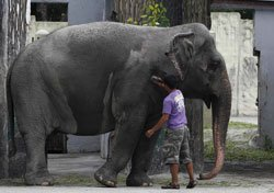 81-year-old 'actor' female elephant dies