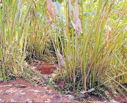 'Forest dept to submit status report on Jamma Malai land'