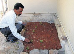 Ayush to distribute mosquito repellent plants