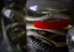 China's snake farmers churns out multi-million dollar business