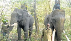 Operation to chase wild elephants begins