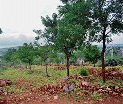 Greening the drylands