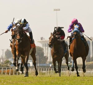 Dazzler primed for Stewards Cup