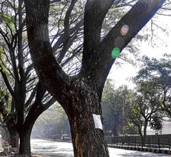 KSPCB's tree census plan a cry in wilderness