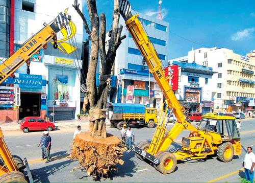 Translocated  MG Road trees  fail to survive