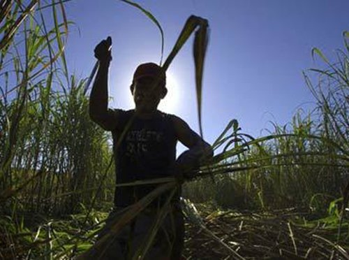 Sweet moment for sugarcane growers