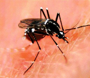 76 dengue cases in City, three dead  in State