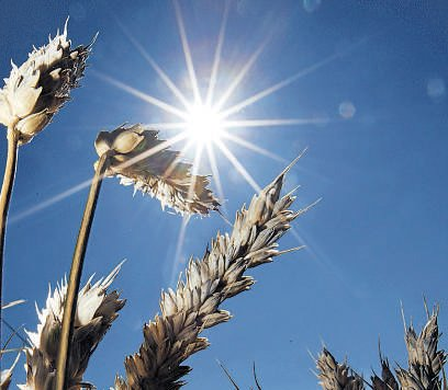 FCI has no grain to meet food security scheme need