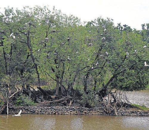 Heavy rain lashes coastal belt, Malnad