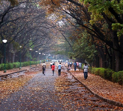 High Court reprieve for clubs in Cubbon Park