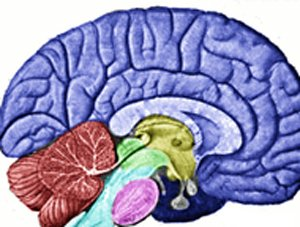 What the brain tells us about search engines