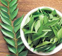 UK advises public to be aware of Indian curry leaves