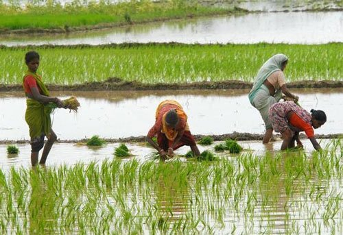CAG report exposes irregularities in AP irrigation projects