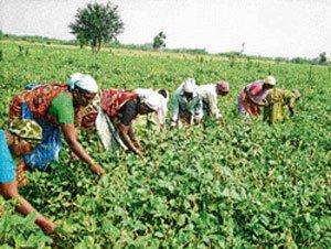 Farmers seek hike in budgetary allocation