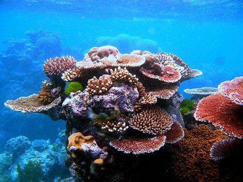 Australia's Barrier Reef slips into 'poor' health