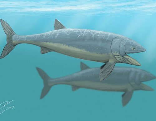 Giant 'Jurassic fish' grew up to 16m long