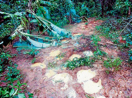 Villagers pour out 'elephantine' woes