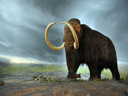 Could woolly mammoth roam Earth again?