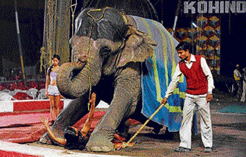Circuses without animal antics may be a new order