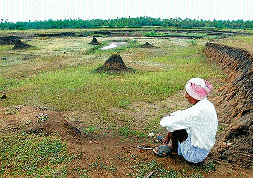 Drought looms large over Lakya hobli