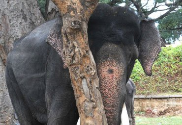 11-year-old boy trampled to death by elephant