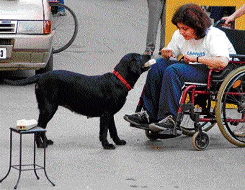 Dogs to help physically challenged