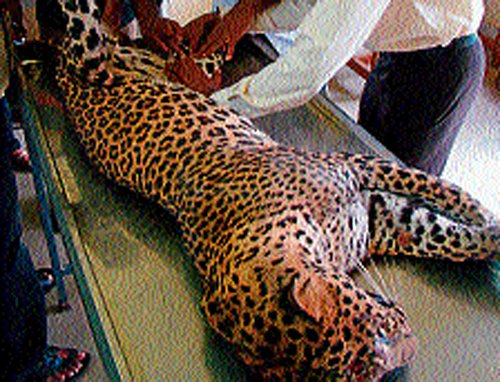 Pilikula may get 'Leopard Recovery Center'