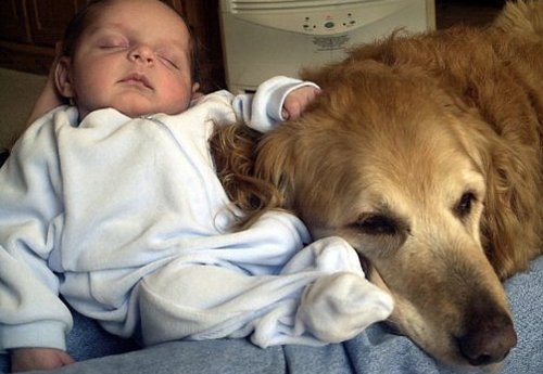 Pet dog helps save tot from abusive babysitter