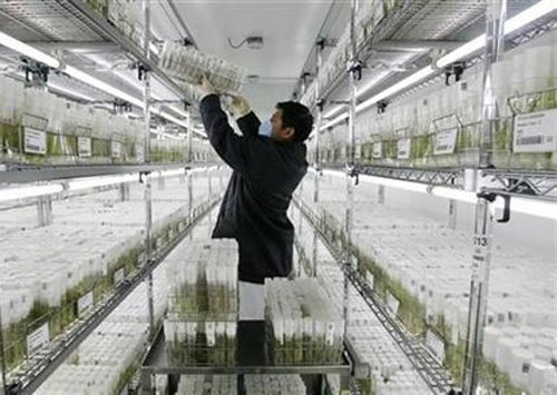 China to build germplasm bank modelled on 'Noah's Ark'
