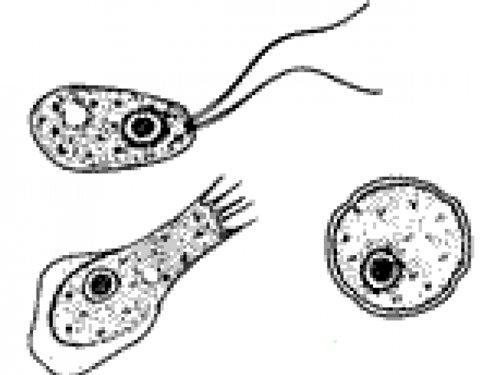 Brain-eating amoeba rattles nerves in Louisiana