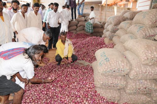 New onion crop arrival brings down prices to Rs 60-70 a kilo